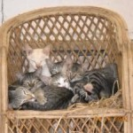 Cats_on_Chair847437