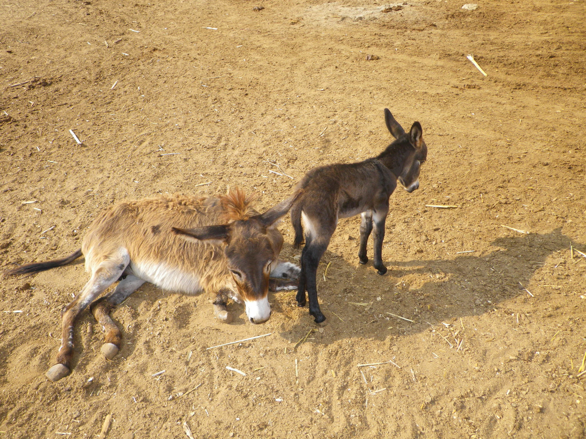 Donkey And Baby 2015a