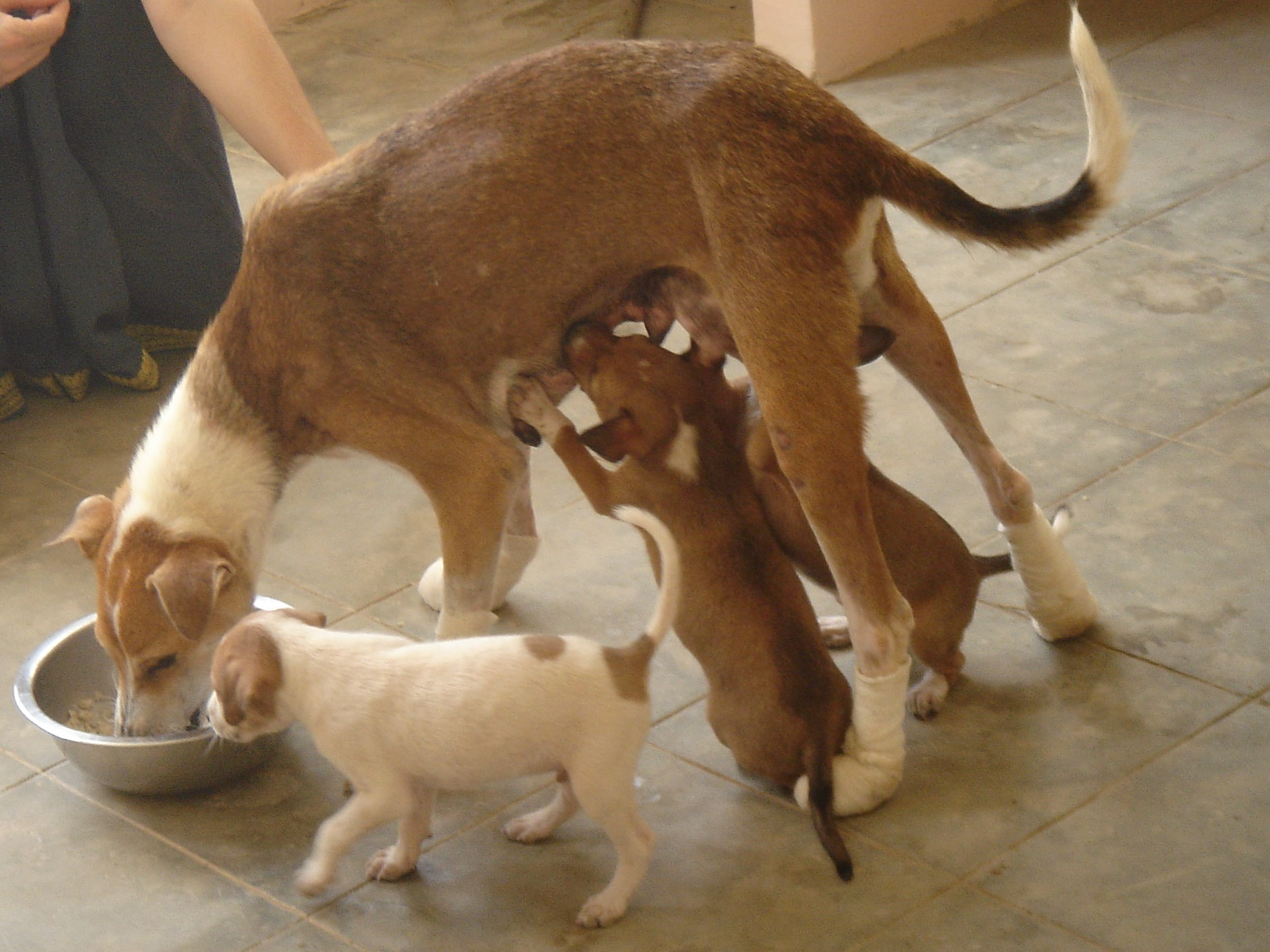 The Solution to Controlling Stray Dog Population in India