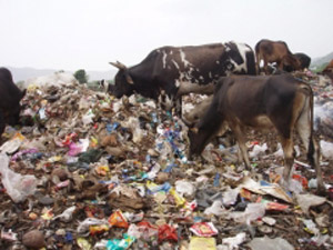 The Plastic Cow Project – Karuna Society for Animals and Nature